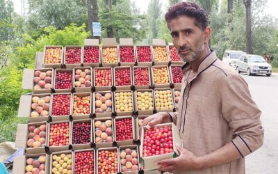 A Day In The Life of Cherry Grower In Kashmir: How Lockdown Has Added To Daily Struggles